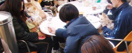 20081221_pc211426_2